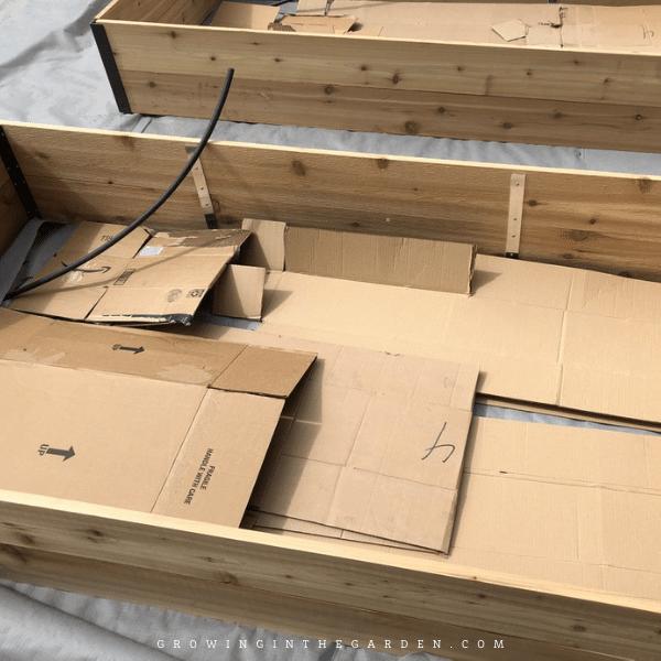cardboard as sheet mulch