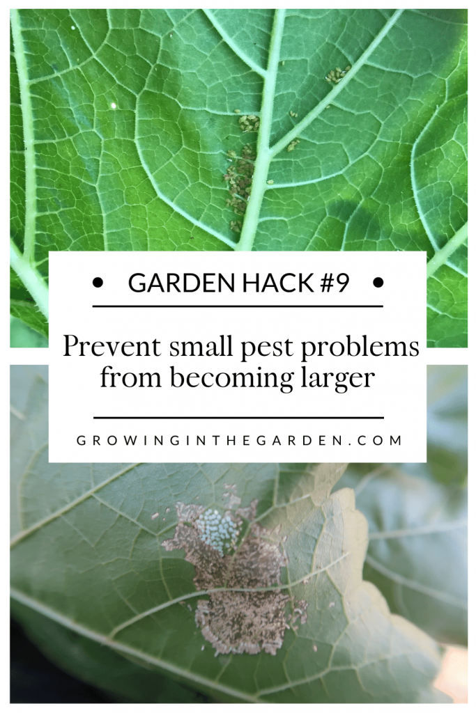 Pest Control Hack #9: Prevent small pest problems from becoming larger