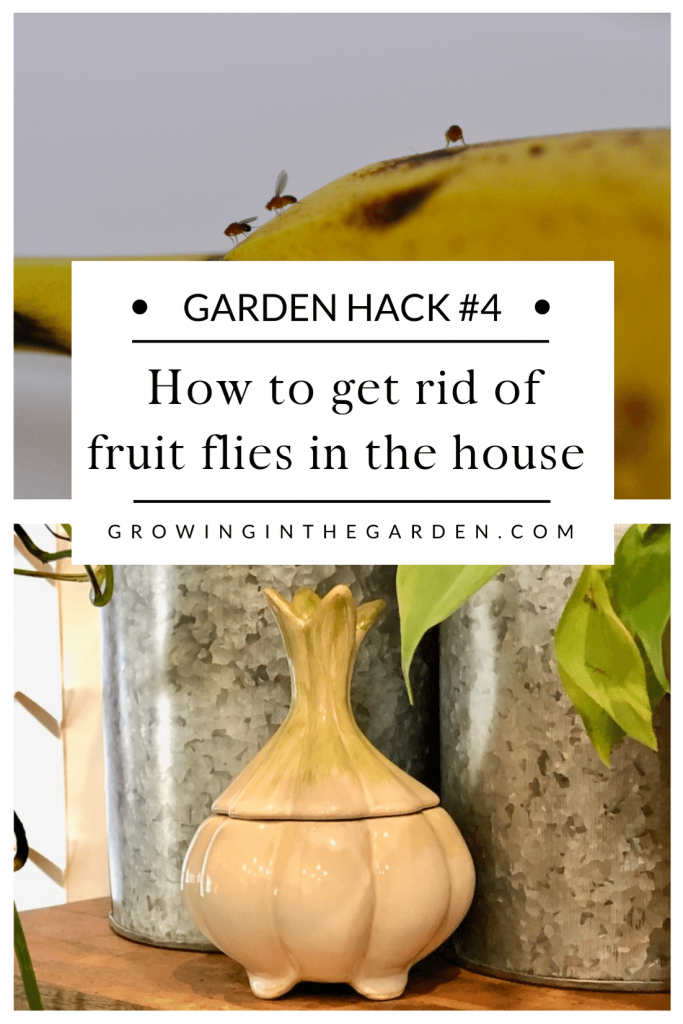 Pest Control Hack #4: How to get rid of fruit flies in the house