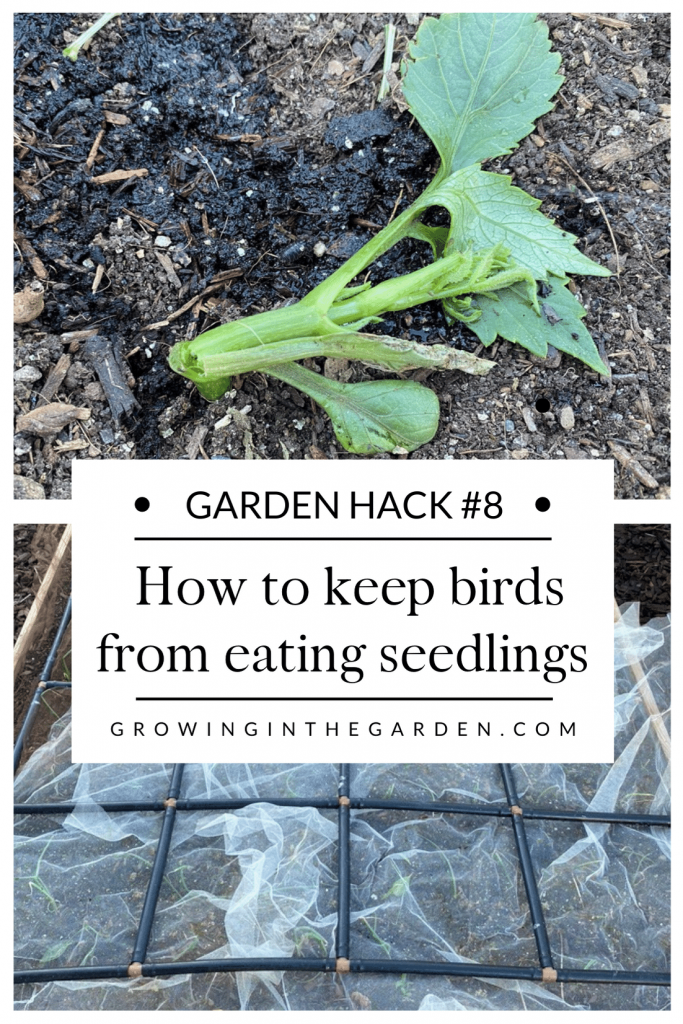 Pest Control Hack #8: How to keep birds from eating young seedlings