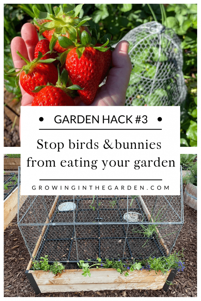 Pest Control Hack #3: How to keep birds and bunnies from eating your garden plants and produce