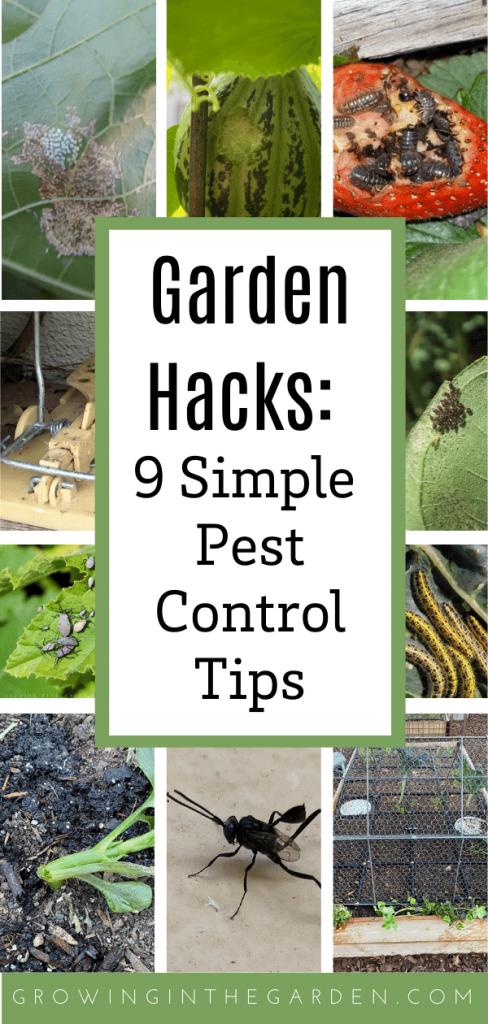 Garden Hacks: 9 Simple Pest Control Tips