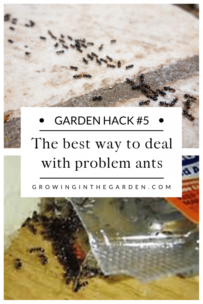 Pest Control Hack #5: The best way to deal with problem ants