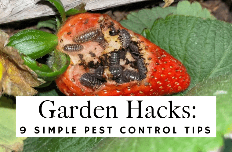 Garden Hacks 9 Simple Pest Control Tips