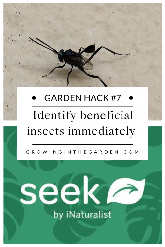 Identify beneficial insects immediately