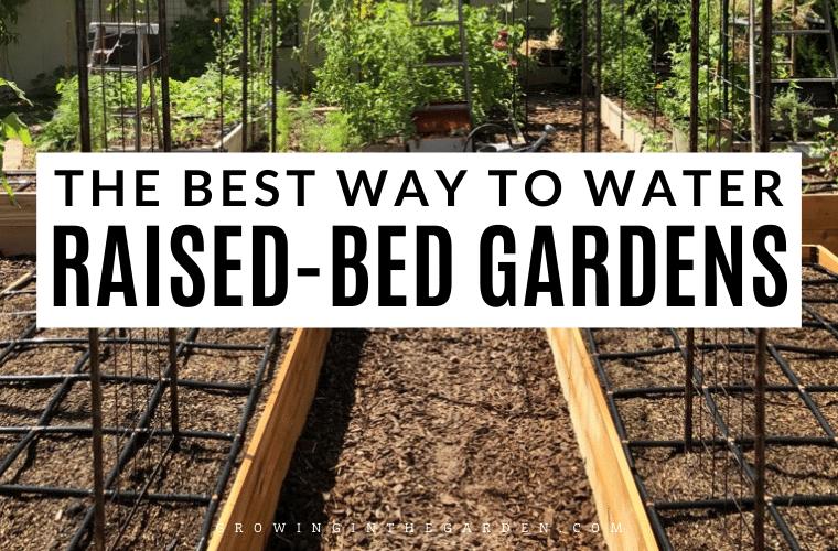 The best way to water raised bed gardens #gardening #watering #driplineirrigation