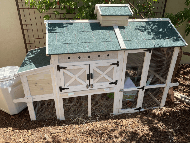 Chicken Supplies: 8 Essentials for New Chicks and Young Chickens