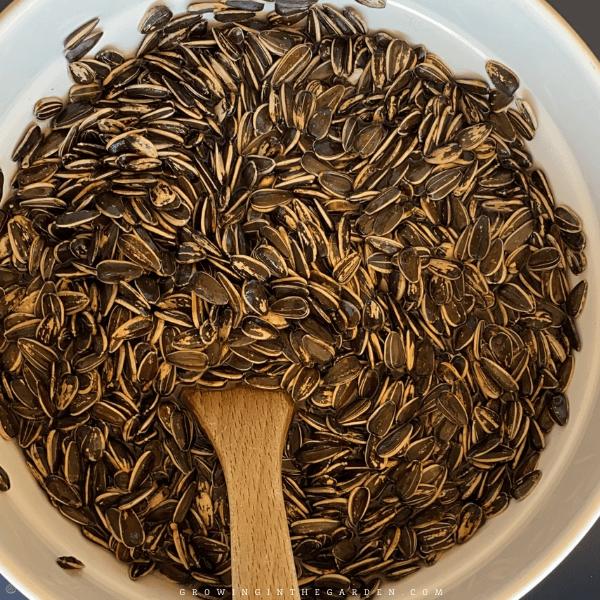 soak sunflower seeds in salted water overnight