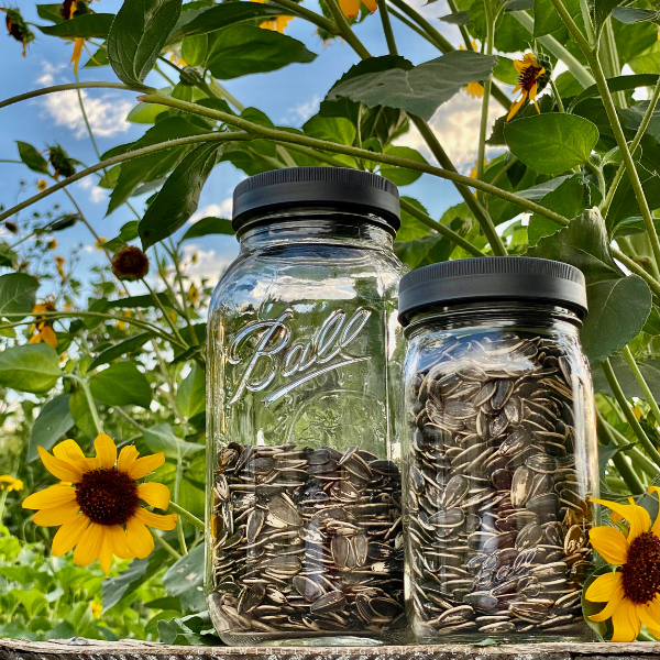 store sunflower seeds in a sealed jar after roasting