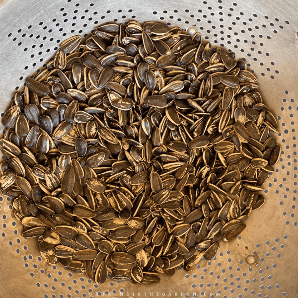 drain water but do not rinse sunflower seeds