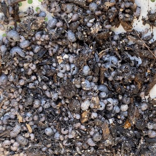 5 Best Ways to Keep Rollie Pollies from Destroying Your Garden