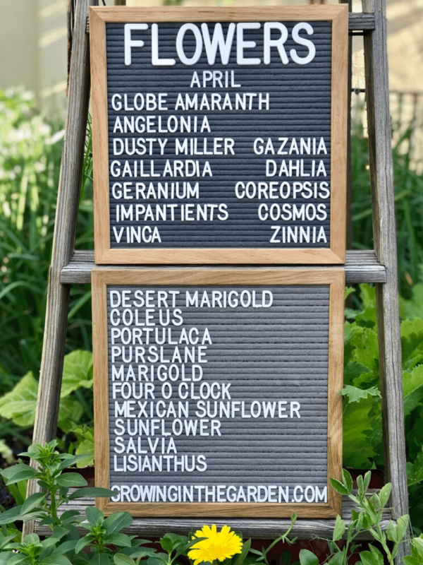 Arizona Garden in April