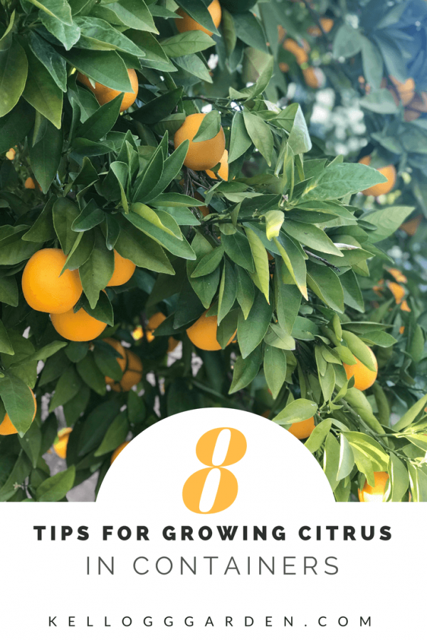 8 tips for growing citrus in containers from Kellogg Garden